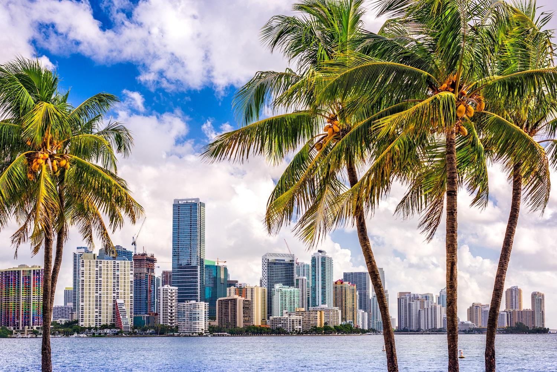 Miami web design | Miami wordpress website development | wordpress website | website redesign | seo services in Miami | Miami fl web design | top web designers in Miami